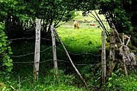 Parque Natural y Reserva de la Biosfera de Somiedo. Asturias. España