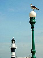 Gull on lamp and lighthouse, Callao, Peru