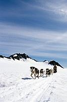 People Enjoy Dog Mushing Tour Godwin Glacier KP AK Summer
