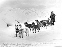 Historic image of woman with sled dog team on ice winter Alaska