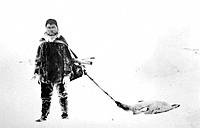 AK Native Eskimo Hunter Pulls Seal in Snow AK WE Spring Historical