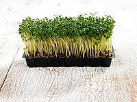 Close_up of a tray of seedlings