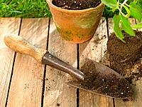 Close_up of a potted plant with a trowel in a lawn