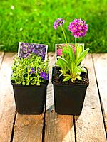 Close-up of two flower pots in a lawn (thumbnail)