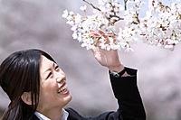 Woman looking up and touching cherry flowers, smiling, side view, Japan