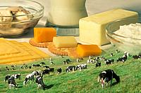Cows In Pasture With Dairy Products Composite