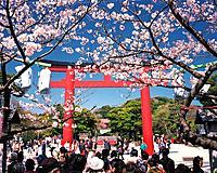 Sacred gate of Tsurugaokahachimangu Shrine, Kamakura City, Kanagawa Prefecture, Japan, Low Angle View, Pan Focus