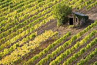 Italy, Tuscany shed in vineyard, elevated view