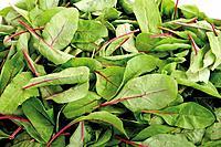 Mangold leaves, close_up