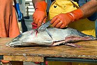 Fisherman cutting up fish