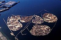 Log rafts in Port Angeles Harbor, Olympic Peninsula.
