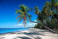 Caribbean _ Martinique _ Salines Beach