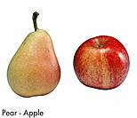Pear _ Apple