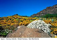 Spain _ Great Canary _ San Bartolome Road Spain