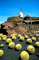 Spain _ Canary Islands _ Lanzarote _ Cactus Garden