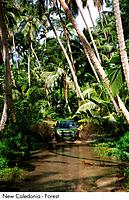 New Caledonia _ Forest