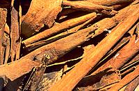 French Caribbean _ Caribbean Islands _ Les Saintes _ Spice _ Cinnamon Stick
