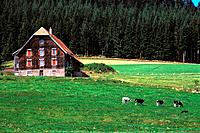 Germany - Black forest - Landscape (thumbnail)