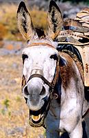 Greece _ Crete _ Donkey