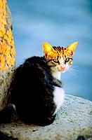 Greece _ Crete _ Héraklion _ Cat