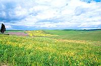 Italy - Area : Tuscany (thumbnail)