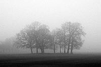group of trees winter foggy misty london england uk europe