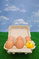 Chick in an egg carton