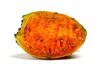 Opuntia ficus-indica, Opuntia ficus-barbarica, Indian fig, cactus pear