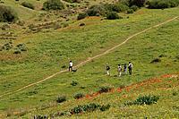 Israel Bitronot Ruhama in Besor region