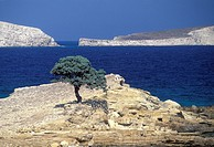 Little Lipsi of the Dodecanese Monodendri single tree beach
