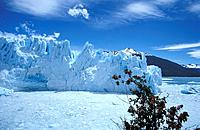 The stunning and expandning glacier in the Los Glaciares National Park Patagonia Argentina