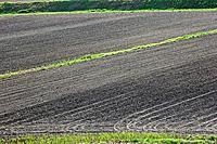 Field_landscape, field,