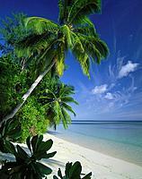 Seychelles, sandy beach, palms, lake,clouded sky, island state, island_group, coast, beach, palm_beach, vegetation, tropical, trees, bushes, nobody, v...