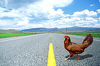 Rooster crossing a deserted highway surrounded by dramatic landscape and clouds.  Why did the chicken cross the road? (English riddle)