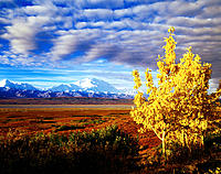 Denali National Park. Alaska. USA