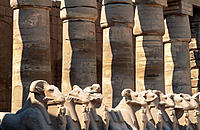 Statues of rams, ruins of temple. Karnak. Egypt