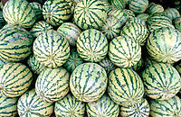 Watermelons. Melaka. Malaysia