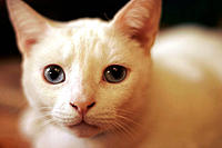 Albino cat
