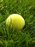 Close_up of tennis ball