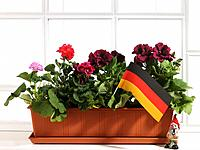 Flower pot with German flag