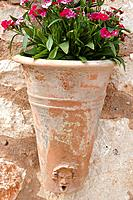 Carnations in a terracotta pot