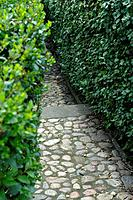 Garden path with cobblestones
