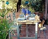 Setted table on the terrace with cats (thumbnail)