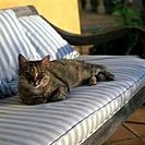 Cat on the garden bench