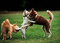 puppies _ playing on meadow