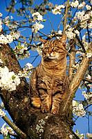tabby domestic cat _ sitting on tree