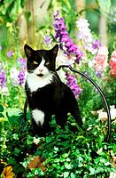 domestic cat _ sitting in front of flowers