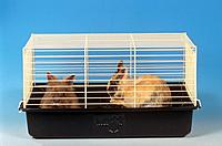 two rabbits in cage