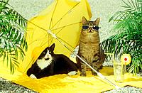 two domestic cats _ under sunshade