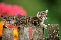 kitten on fence